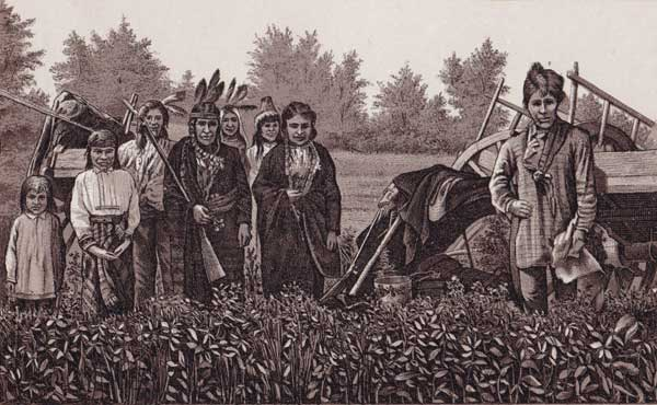 Chippewa Indians of the Northwest